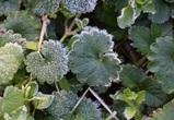 Из-за заморозков в Воронежской области объявлено штормовое предупреждение