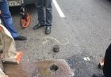 Дороги, отремонтированные в Воронеже по госпрограмме, вызвали нарекания
