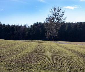 Прошедшие заморозки поставили под угрозу урожай Воронежской области