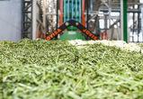 «Молвест» начнет экспорт кормов премиум-класса уже этим летом