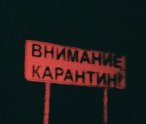 В Воронежской области введен карантин из-за ядовитого сорняка-убийцы