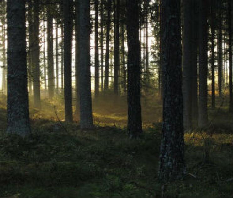 В Северном лесу Воронежа на девушку совершено нападение