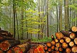 Мэру воронежского райцентра грозит 7 лет за варварскую вырубку 400 деревьев