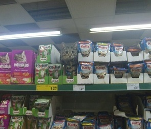 Фото кота, спрятавшегося среди корма в супермаркете, умилило воронежцев