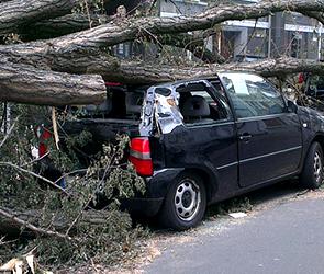 В центре Воронежа рухнуло дерево, придавив две иномарки