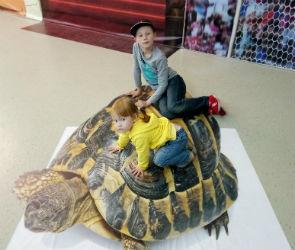 Воронежцев приглашают прокатиться на черепахе