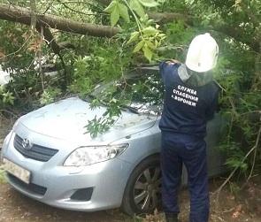 В Воронеже дерево упало на «Тойоту» во время сильного ветра