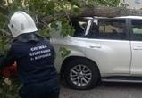 В центре Воронежа на «Тойоту Ленд Крузер» упало дерево: пострадал мужчина