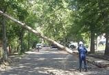Спасатели рассказали о последствиях разбушевавшейся стихии в Воронеже