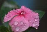 Рабочая неделя в Воронеже и области будет теплой и дождливой