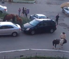 Табун лошадей, разгуливающих по парковке в Воронеже, попал на видео