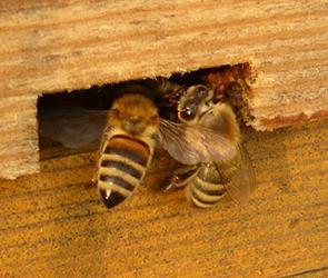 Воронежский пчеловод обокрал коллегу, похитив 8 ульев с пасеки