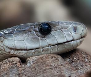 В Воронеже юные живодеры из детсада насмерть забили камнями неядовитую змею