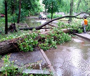 Появились фото и видео деревьев и рекламных щитов, сломанных ураганом в Воронеже
