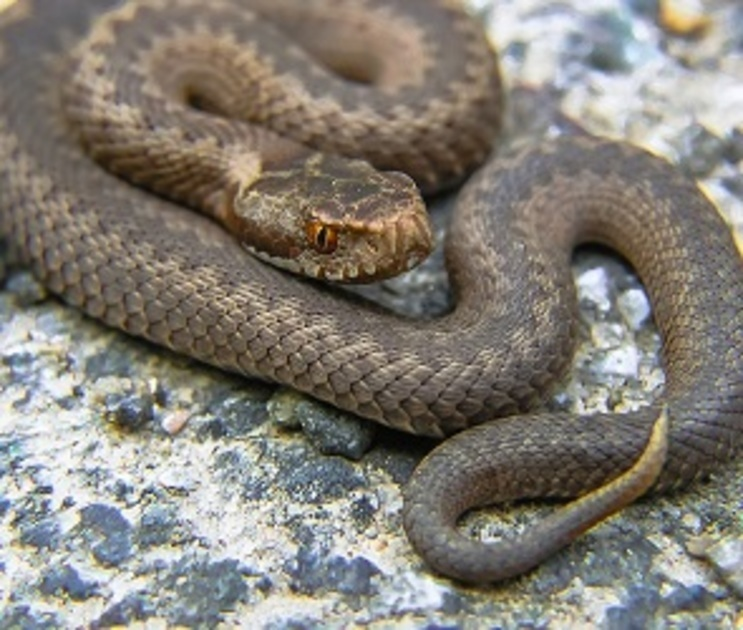 14 человек подверглись укусам змей в Воронежской области