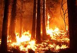 МЧС объявило о высокой пожароопасности в нескольких районах Воронежской области