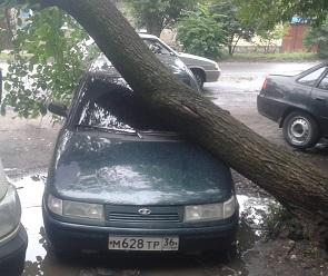 В Воронеже упавшее дерево повредило три машины