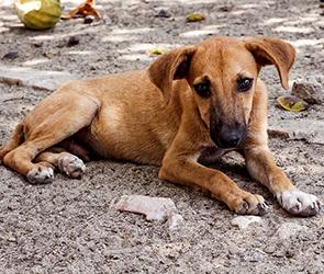 В промзоне Воронежа подростки-живодеры устроили расстрел собак и щенков