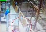Девушка пострадала после нападения какаду в контактном зоопарке Воронежа