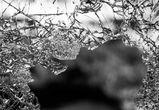 Под Воронежем 42-летний водитель погиб в лобовом столкновении с КАМАЗом