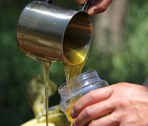 В центре Воронежа проведут масштабную дегустацию меда