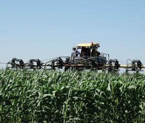 Семена кукурузы под Воронежем выращивают при помощи инновационных технологий