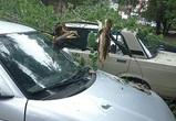 Упавшее дерево повредило три машины на левом берегу Воронежа