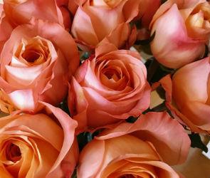 19-летний воронежец пойдет под суд за кражу цветов для любимой девушки