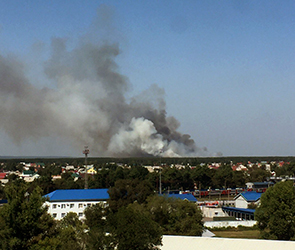 Очевидцы публикуют фото крупного лесного пожара на левом берегу в Воронеже