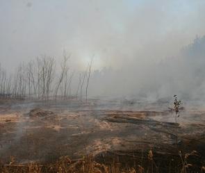 Страшный лесной пожар в Воронеже тушили 200 спасателей