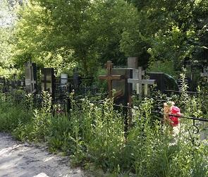 Воронежцам не советуют сажать деревья на могилах родственников