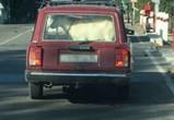 Воронежцы сняли на фото водителя, возившего живую козу в багажнике авто