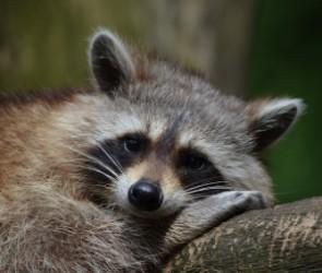 За помощь в благоустройстве Воронежский зоопарк подарит горожанам билеты