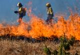 Под Воронежем произошел крупный ландшафтный пожар площадью 700 кв м