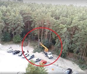 На видео попали бессовестные дровосеки, орудующие в Северном лесу Воронежа