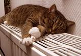 Мэрия Воронежа назвала сроки подачи отопления в дома, до сих пор не отапливаемые