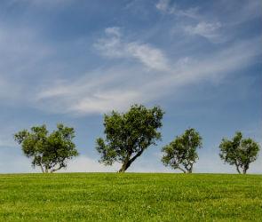 В Воронеже обсудят создание новой лесопарковой зоны