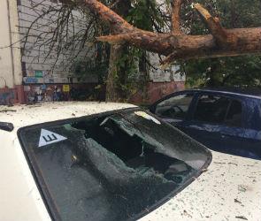 Сосна рухнула на две машины в Советском районе Воронежа