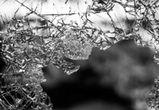Дебошир разгромил автомобиль воронежца, севшего за руль пьяным