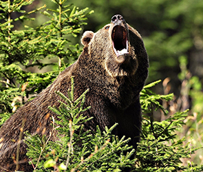 Стали известны подробности трагедии с медведем, убившим человека под Воронежем