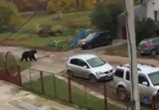 В сети появилось видео медведя, убившего человека под Воронежем