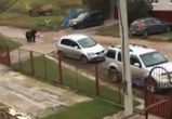 После ЧП с медведем на владельца частного зоопарка завели уголовное дело