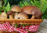 Воронежская область вошла в топ-15 регионов, где любят грибы