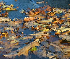 В выходные в Воронеже ожидаются дожди и заморозки