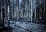 Возле трассы М-4 «Дон» в Воронеже расчистят 318 га леса