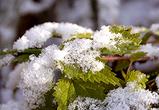На следующей неделе синоптики обещают первый снег в Воронеже