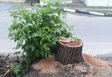 В Воронеже неизвестные вырубили деревья на 200 000 рублей