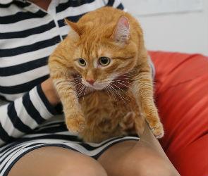 Краш-тест колготок: вычисляем идеальные с помощью котиков, липучек и «Уралтеста»
