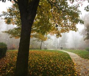 В последние выходные октября в Воронеже потеплеет до +8°C