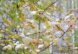 В Воронеже всю неделю будет идти мокрый снег